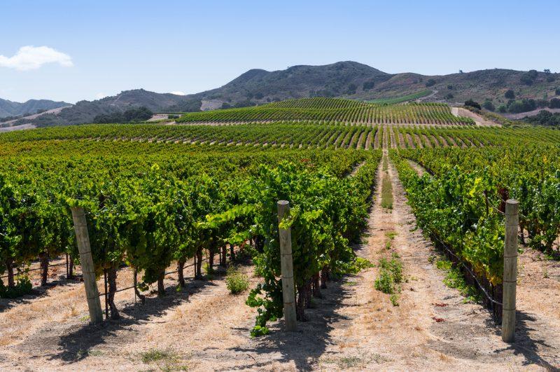 vineyards in buellton