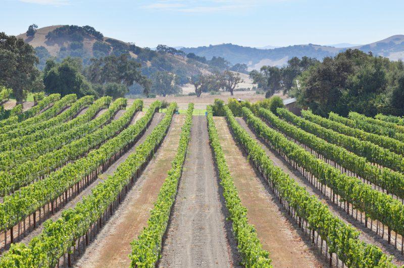 vineyards in solvang